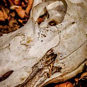 Zebra Skull Art Print