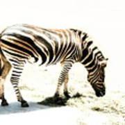 Zebra Stripes Art Print