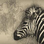 Zebra Study Art Print