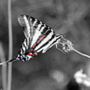 Zebra Swallowtail Butterfly 2016 Art Print