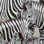 Zebra Triptyche Left Art Print