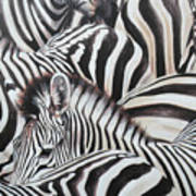Zebra Triptyche Middle Art Print