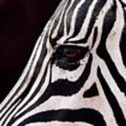 Zebras Eye Art Print