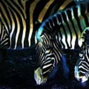Zebras Glow Art Print