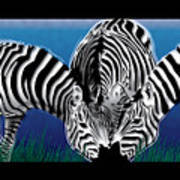 Zebras In Blue Oasis Art Print