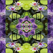 Zen Lilies Art Print by Bell And Todd