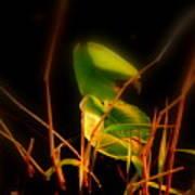 Zen Photography - Sunset Rays Art Print