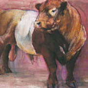 Zeus  Red Belted Galloway Bull Art Print