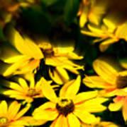 Zinnia Flower Art Print
