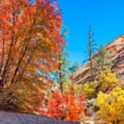 Zion Autumn Colors Art Print