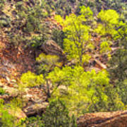 Zion National Park Small Tributary Of The Virgin River Art Print