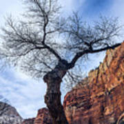 Zion Tree Woman Art Print
