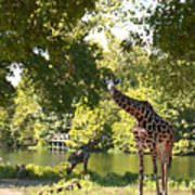 Zoo Landscape Art Print