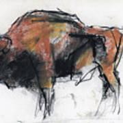Zubre  Bialowieza Art Print