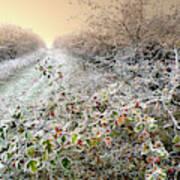 Autumn Frosts Art Print