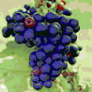 Blue Grape Bunches 6 Art Print