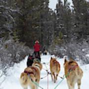 Dog Sledding Near Whitehorse Yukon Canada Art Print