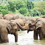 Elephants In River Art Print