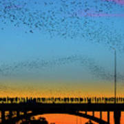 Hundreds Of People Gather To See The World's Largest Urban Bat C Art Print