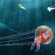 Jellyfish Noctiluca Pelagia Art Print