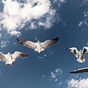 Myanmar, Inle Lake, Seagulls Inflight Art Print
