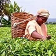 Tea Picker In Kenya Art Print