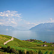 Vineyards Around Lake Leman Art Print