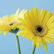 Yellow Flowers On Blue Background Art Print