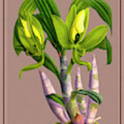 Orchid Vintage Print On Colored Paperboard Art Print