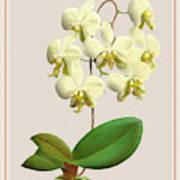 Orchid Vintage Print On Tinted Paperboard Art Print
