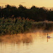 Beautiful Dawn Landscape Image Of River Thames At Lechlade-on-th Art Print