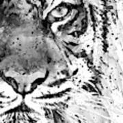 Black And White Half Faced Tiger Art Print