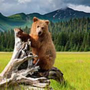 Brown Bear, Lake Clark National Park Art Print