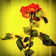 Dying Flower Against A Yellow Background Art Print