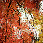 Fall Colors In Japan Art Print