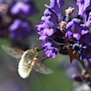 Fly Bee Art Print