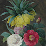 Four Peonies And A Crown Imperial  Art Print