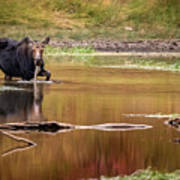 Moose At Green Pond Art Print