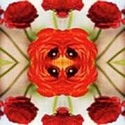 Ranunculus Flower Art Print