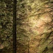 Stunning Fine Art Landscape Image Of Winter Forest Landscape In  Art Print
