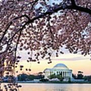 Jefferson Memorial Framed By Cherry Art Print