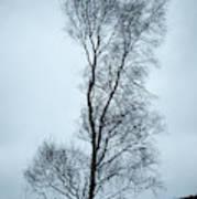 Moody Winter Landscape Image Of Skeletal Trees In Peak District  Art Print