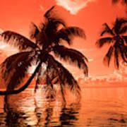 Palm Trees At Sunset, Moorea, Tahiti Art Print