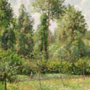 Poplars  Eragny  Art Print