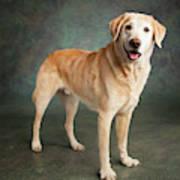 Portrait Of A Labrador Mixed Dog Art Print
