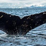 Whale In The Ocean, Southern Ocean Art Print