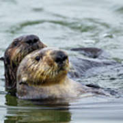 Sea Otter Mother And Pup, Elkhorn Slough Art Print