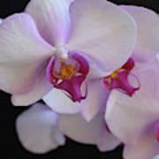 7195-orchids Art Print