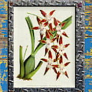 Orchid Framed On Weathered Plank And Rusty Metal Art Print