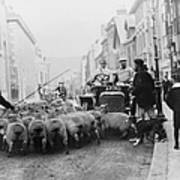 A Car Surrounded By Sheep, Lewes High Art Print